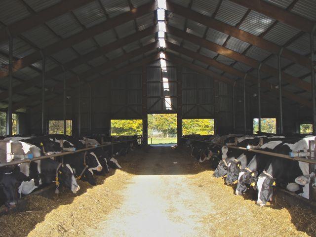 Die Bäurin (etc.) bewirtschaftet einen Hof mit 200 Kühen. Urlaub ist da nicht drin. (Foto: Birte Vogel)