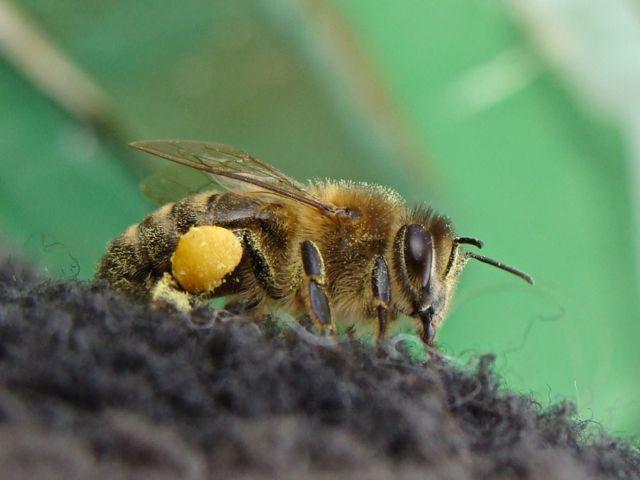 Die Bienen wurden sein Ersatz für die geliebte Landwirtschaft. (Foto: Birte Vogel)