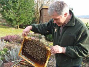 Stirbt die Biene, stirbt auch der Mensch
